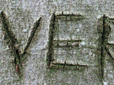 tree-255511_1280